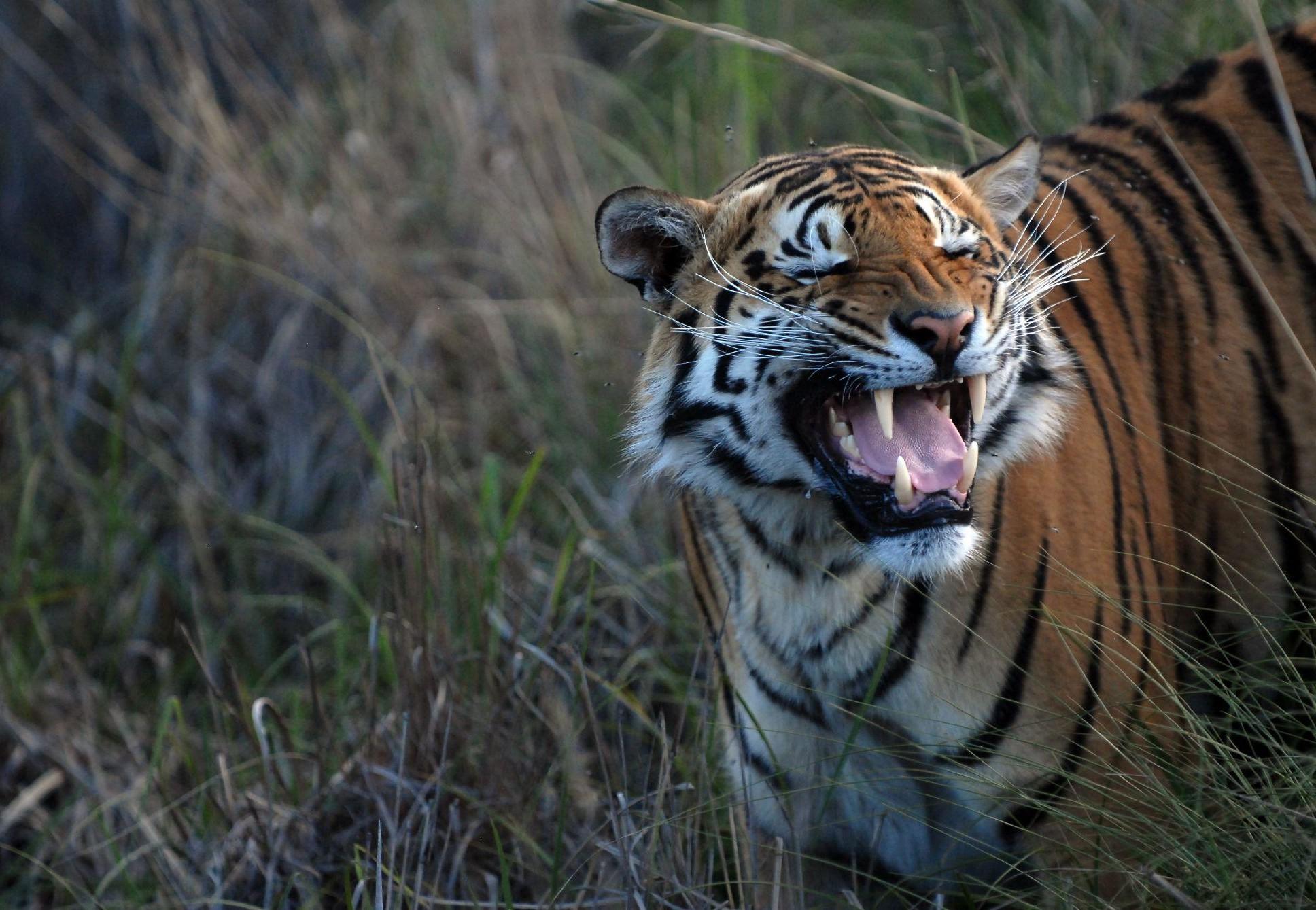 Tiger Coda at LIONSROCK
