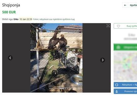 Auf der Plattform merrjep.com werden Adler zum Verkauf angeboten