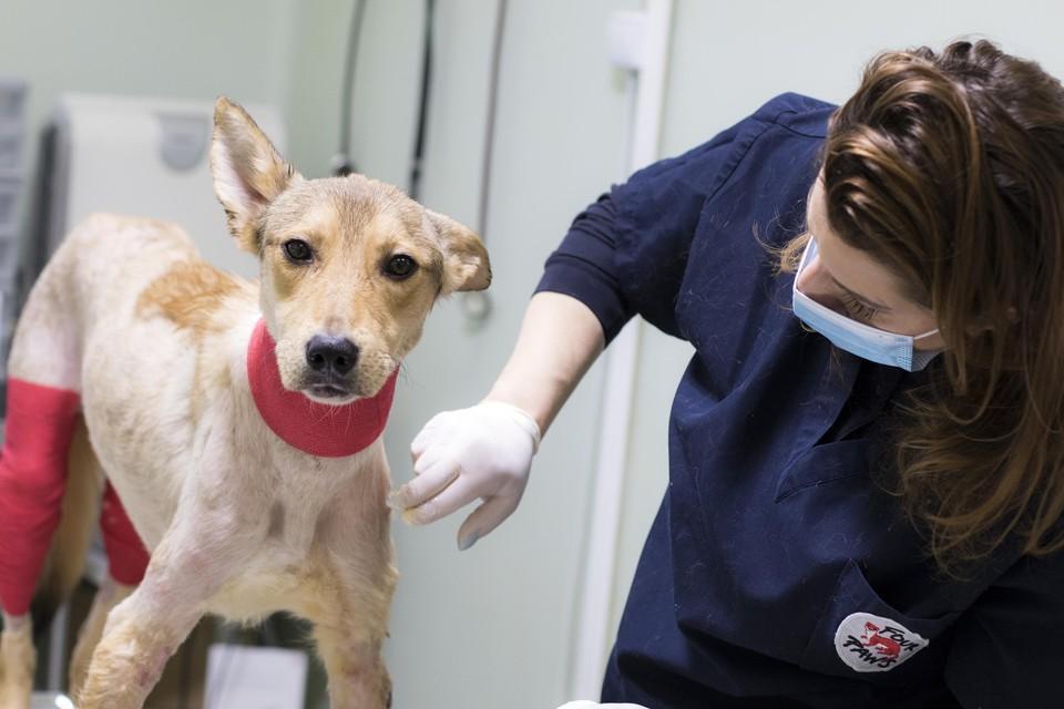 der lange Heilungsprozess von Hund Jason