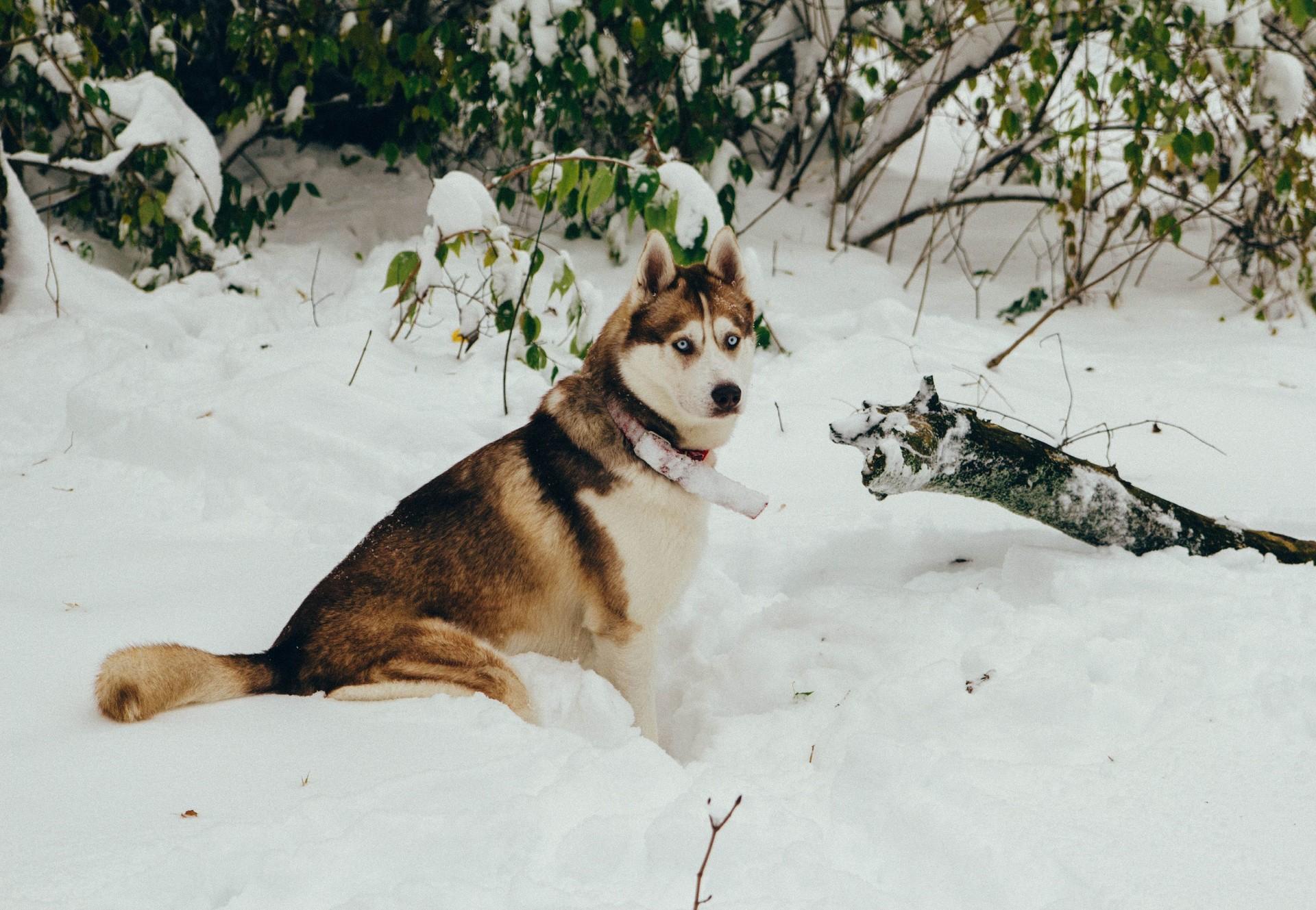 Bien prendre soin de son chien en hiver