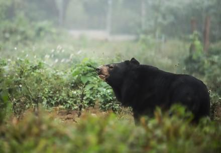 Bear in our SANCTUARY Ninh Binh