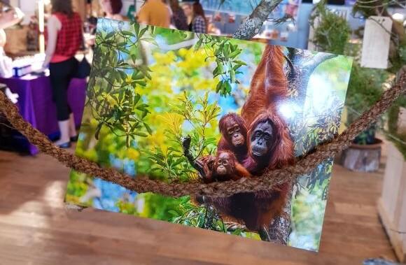 QUATRE PATTES a présenté son projet pour les orangs-outans orphelins de Bornéo