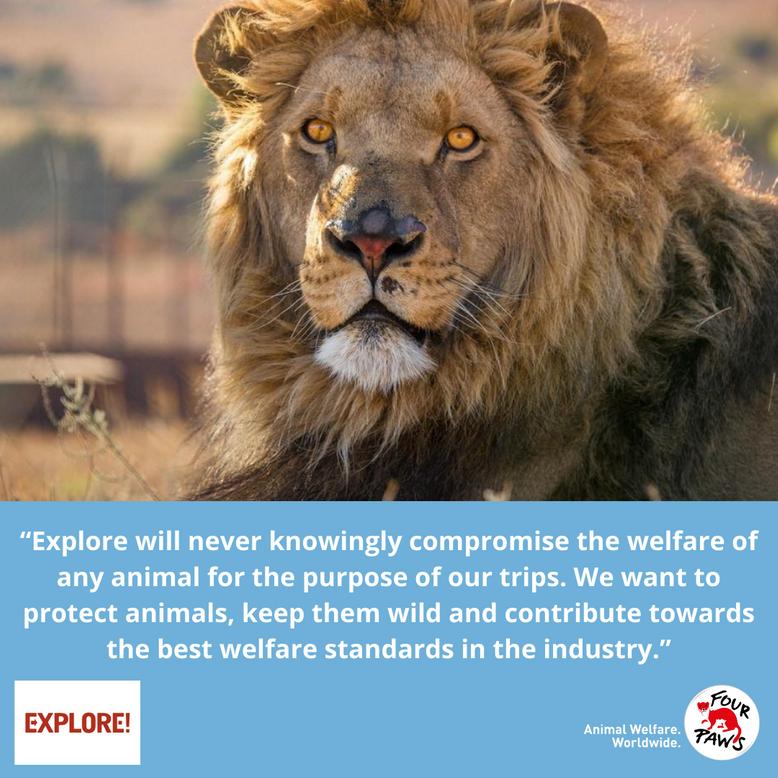 Animal Charity - Explore Quote