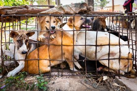 Hund gefangen in einem kleinen Käfig