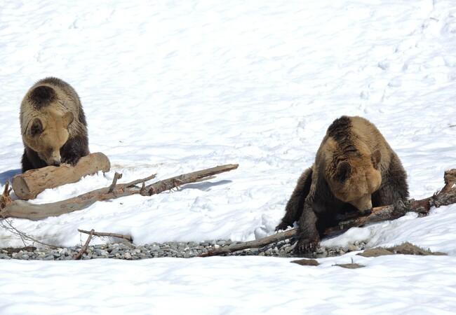 Amelia und Napa im Arosa Bärenland