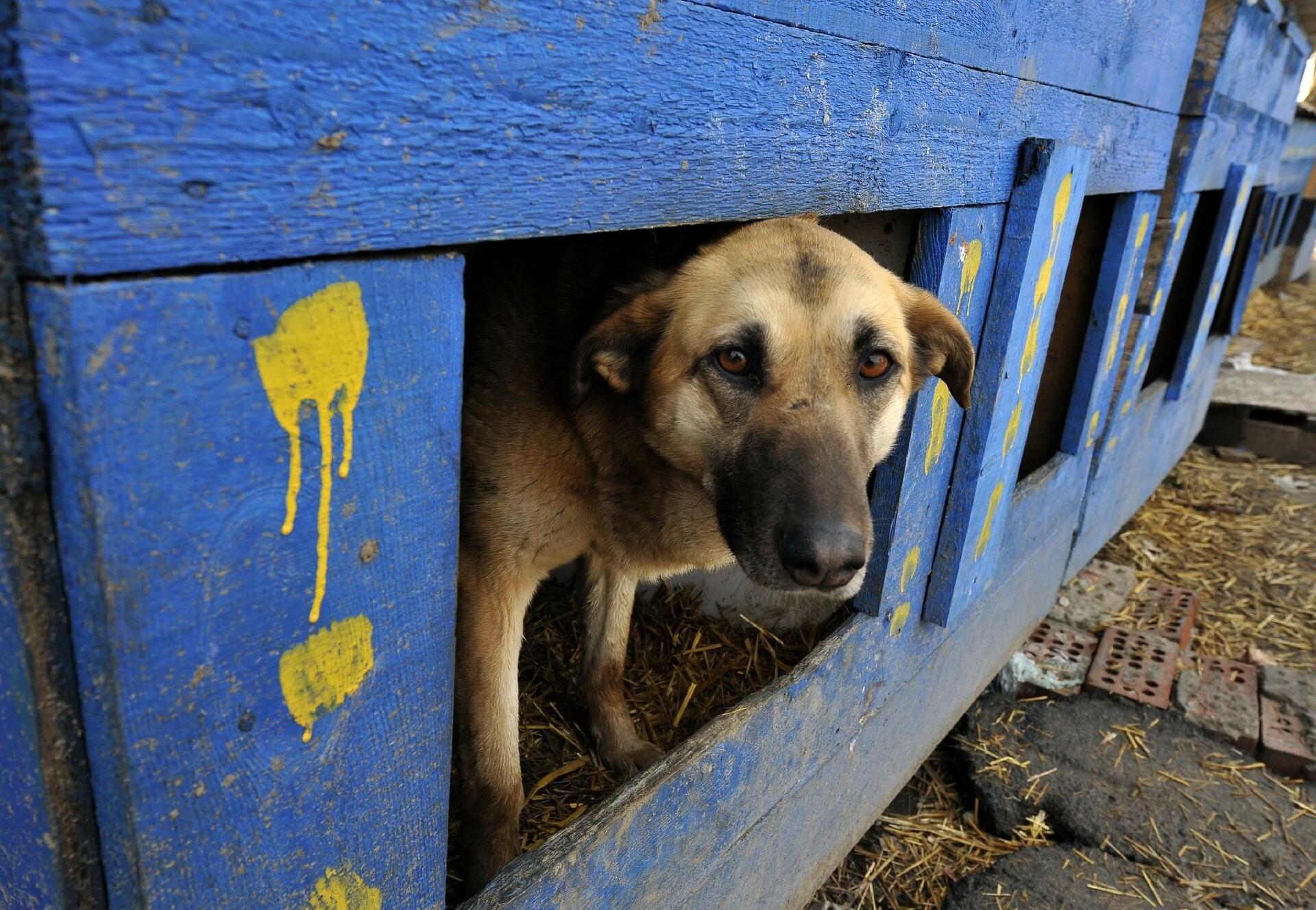 Streunerhund in Bulgarien