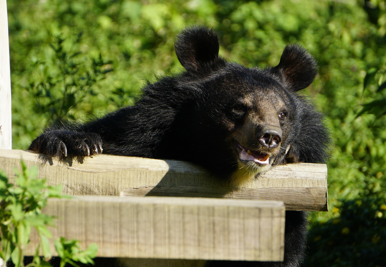 Bear Cuc
