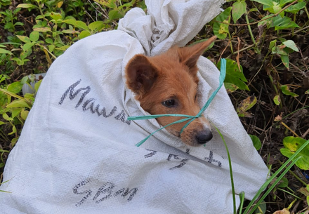 Borneos geheime Hundefleischindustrie