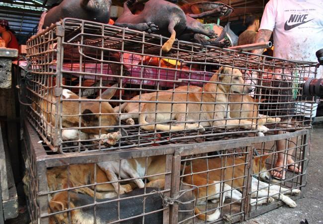 Des chiens destinés à la consommation sur un marché en Asie