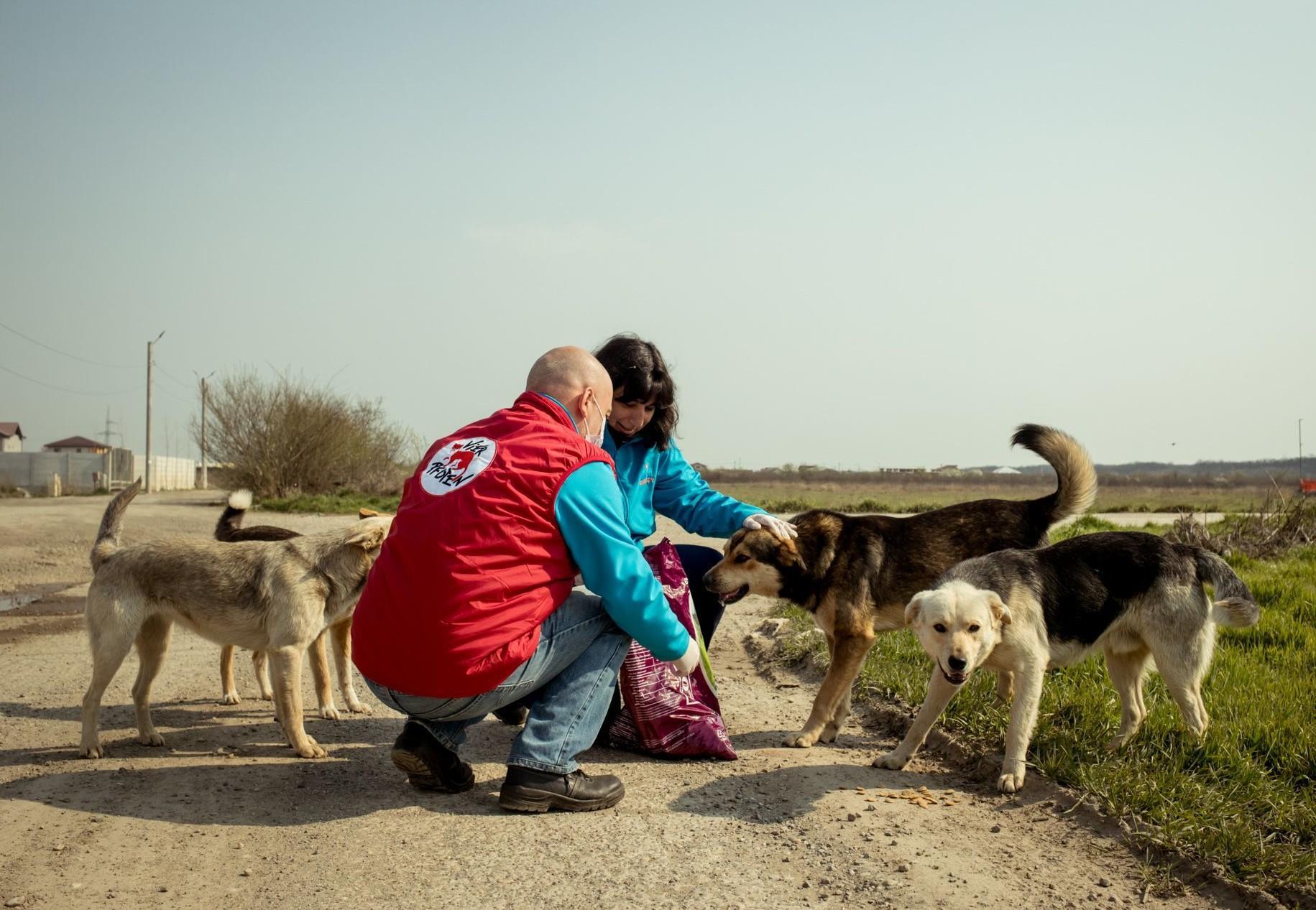 Streunerhilfe in Rumänien