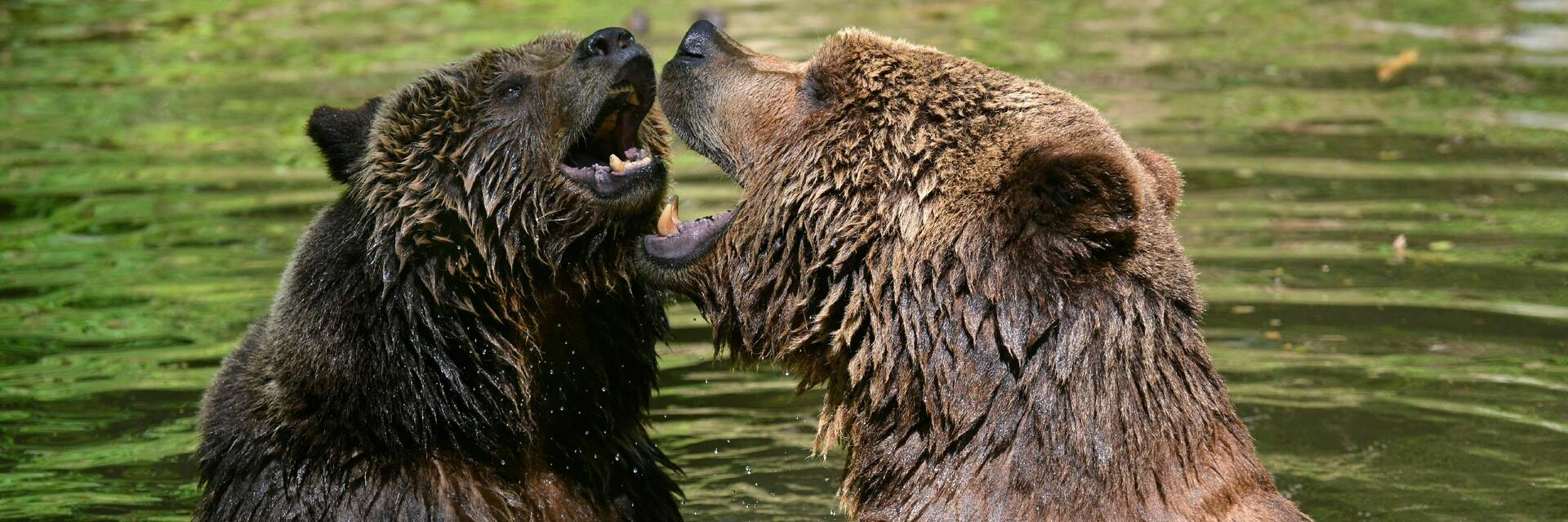 Two happy rescued bears