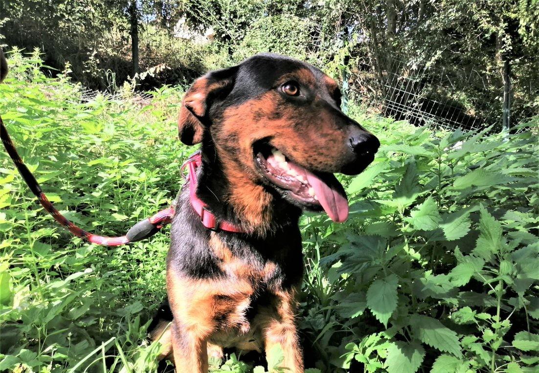 куче Орвин на фотосесия