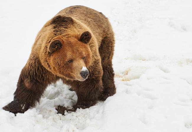 Meimo das erste Mal im Schnee