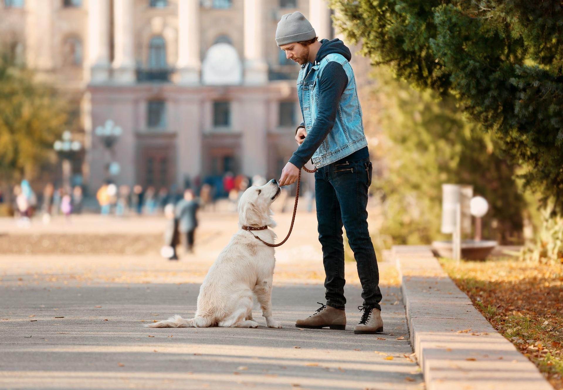 Hund mit Halter