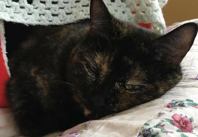 Animal Charity - Cat