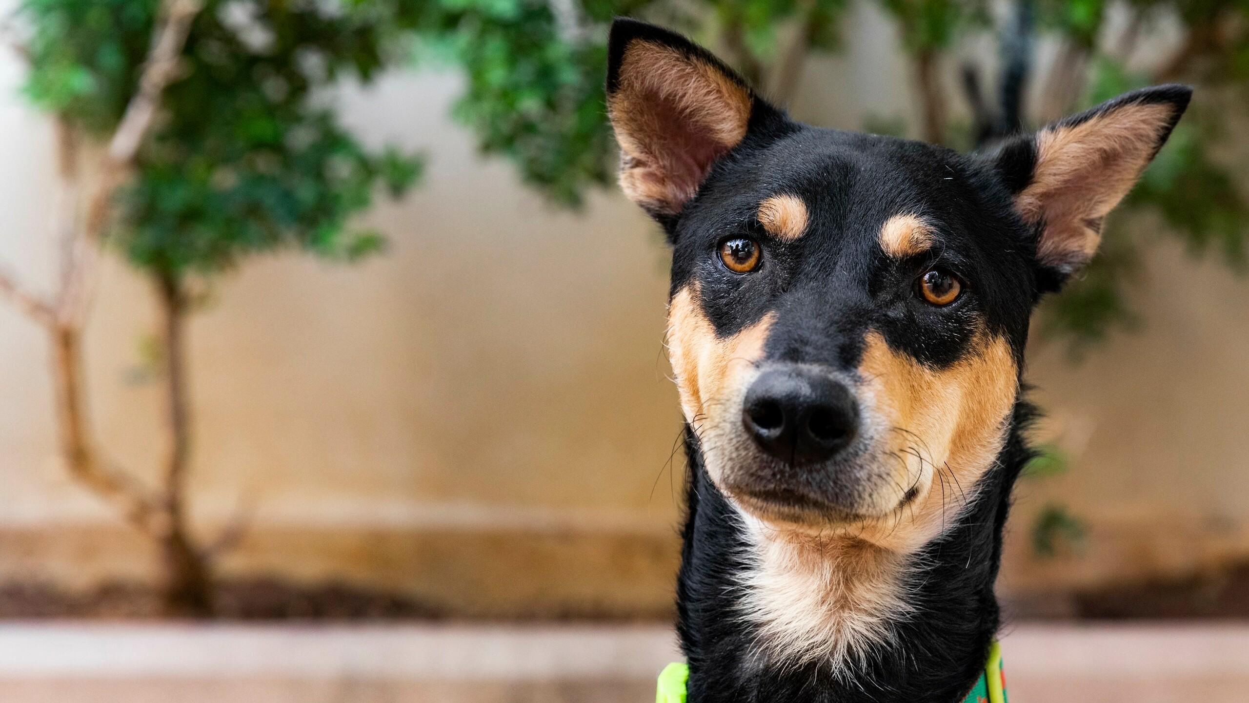 Dog Benji