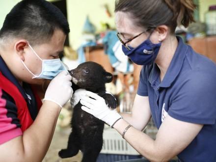 Bear cub Mochi