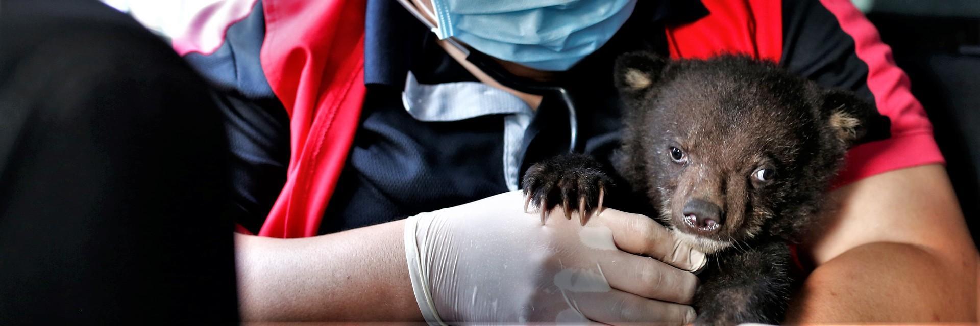 Bärenmädchen Mochi wird gerettet