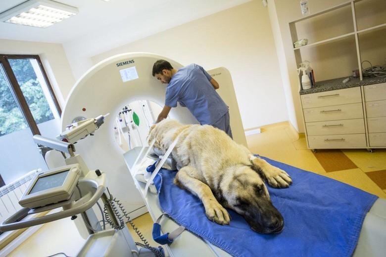 Dog Raffy surgery in Bulgaria