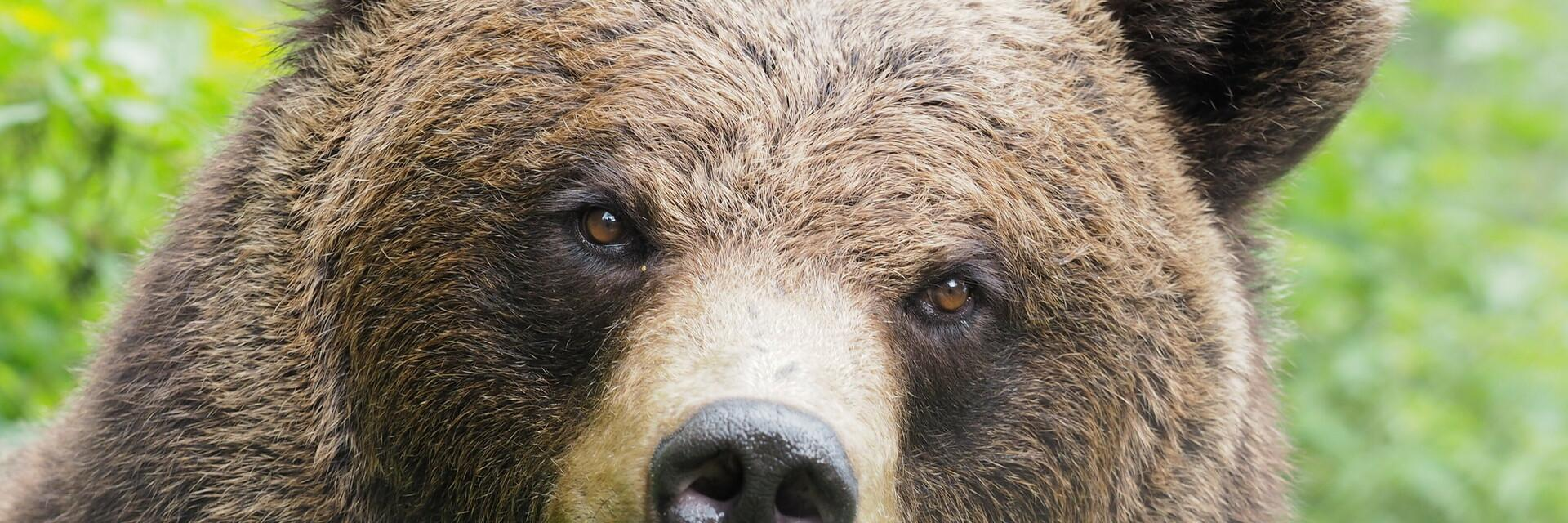 Bear Emma