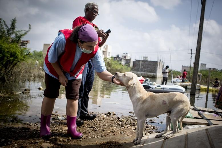 dog-people-sea-side