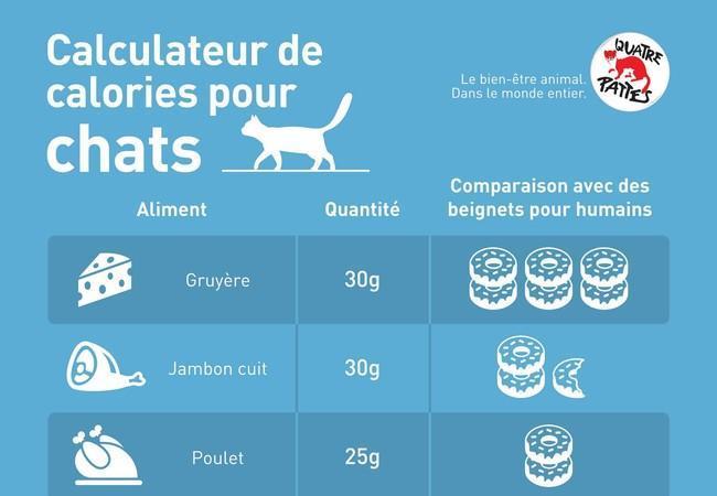 Calculateur de calories pour chats