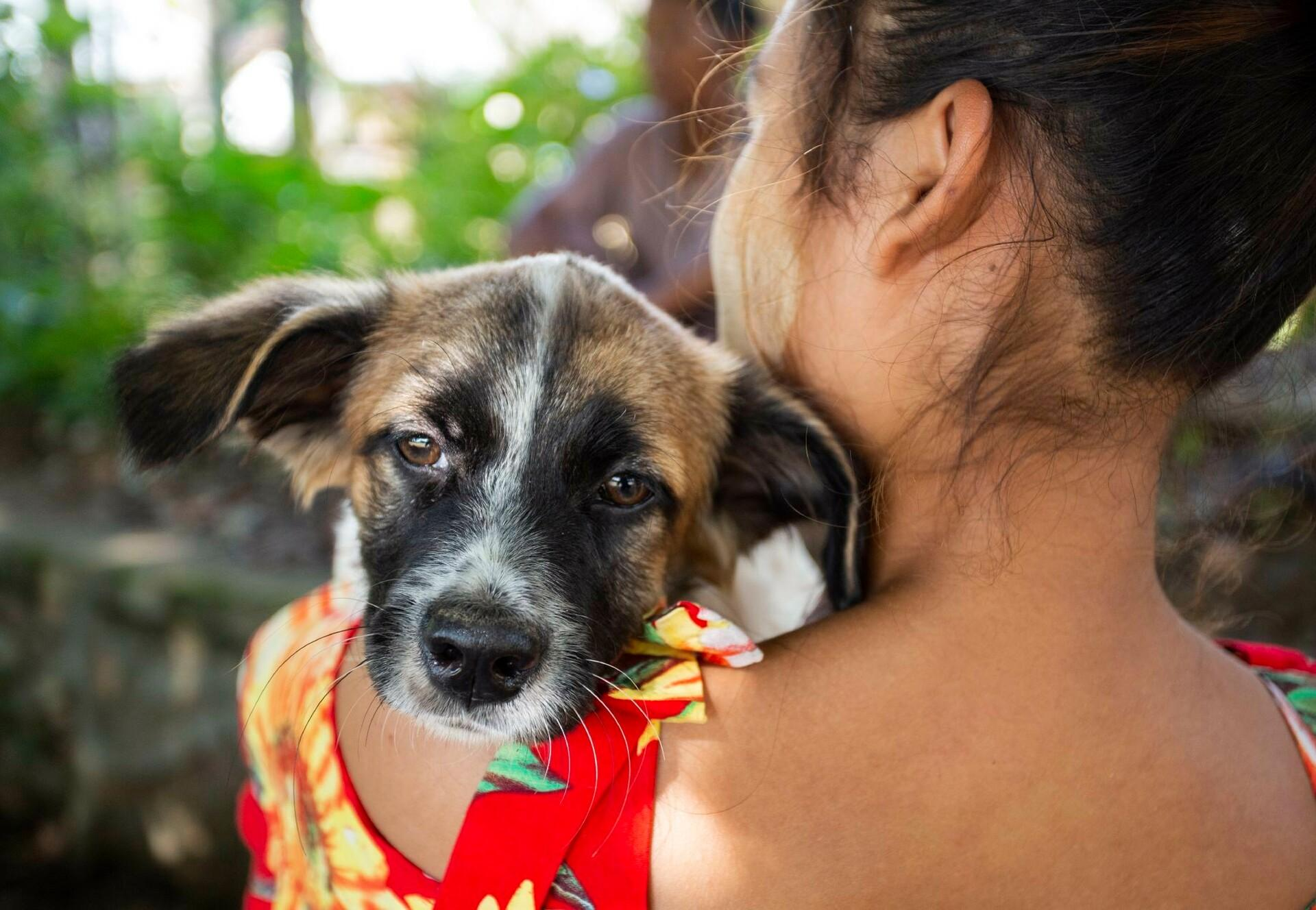 30,000 animals vaccinated against rabies