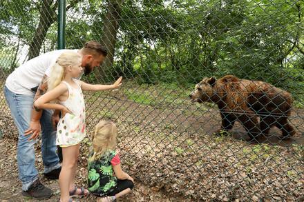 Führungen durch das Bärenschutzzentrum