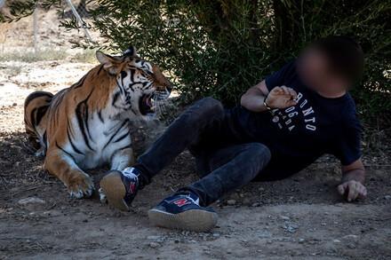 Mettons fin au tourisme impitoyable qui exploite les animaux pour notre divertissement