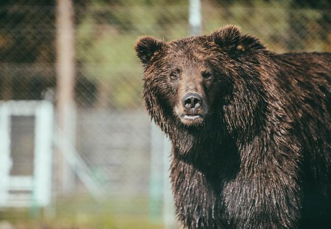 Bear Frankie