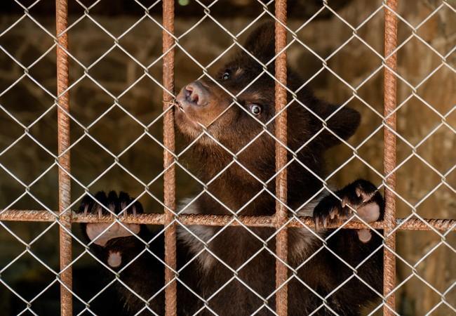 Cub Andor in his cage