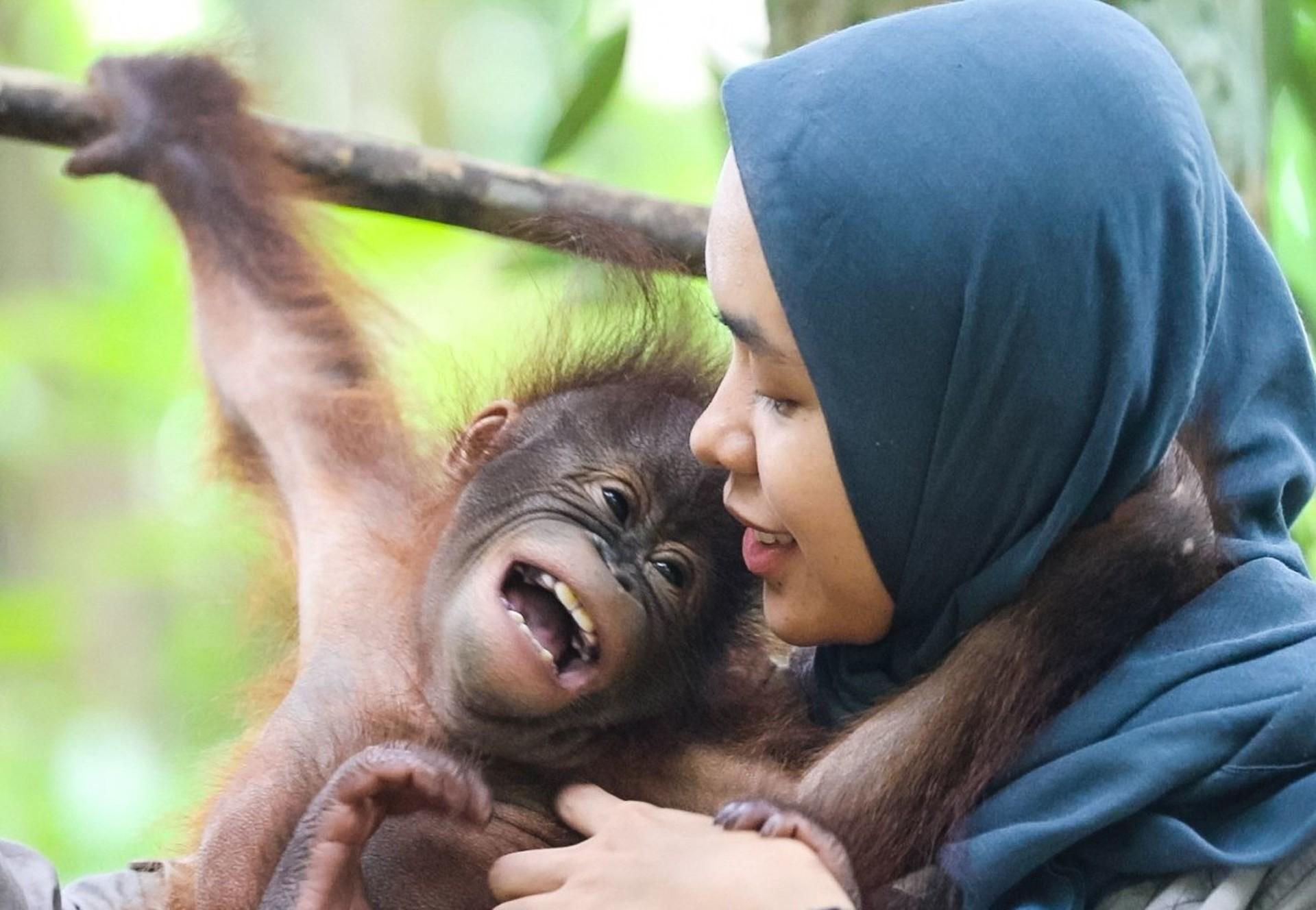 Aidez les orangs-outans à travers un parrainage