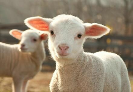 Check your Wool