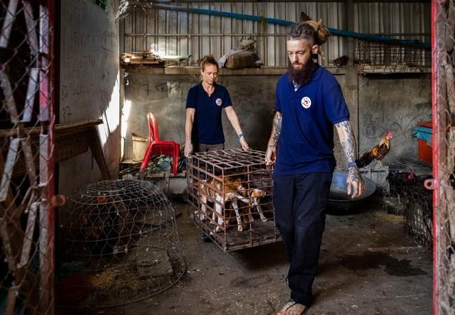 Gefangene Katzen in Hanoi