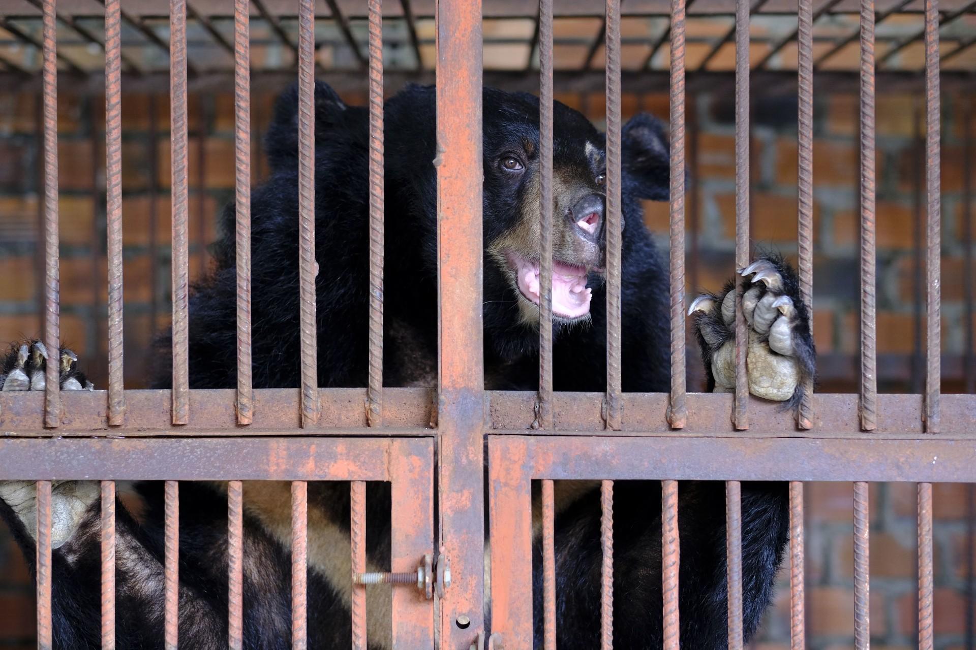 La mission de sauvetage d'ours la plus impressionnante de QUATRE PATTES