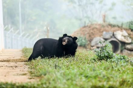 pétition pour les ours à bile au vietnam