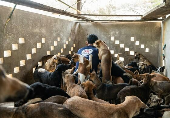 Slaughterhouse-bound minivan carrying 61 dogs intercepted in Cambodia