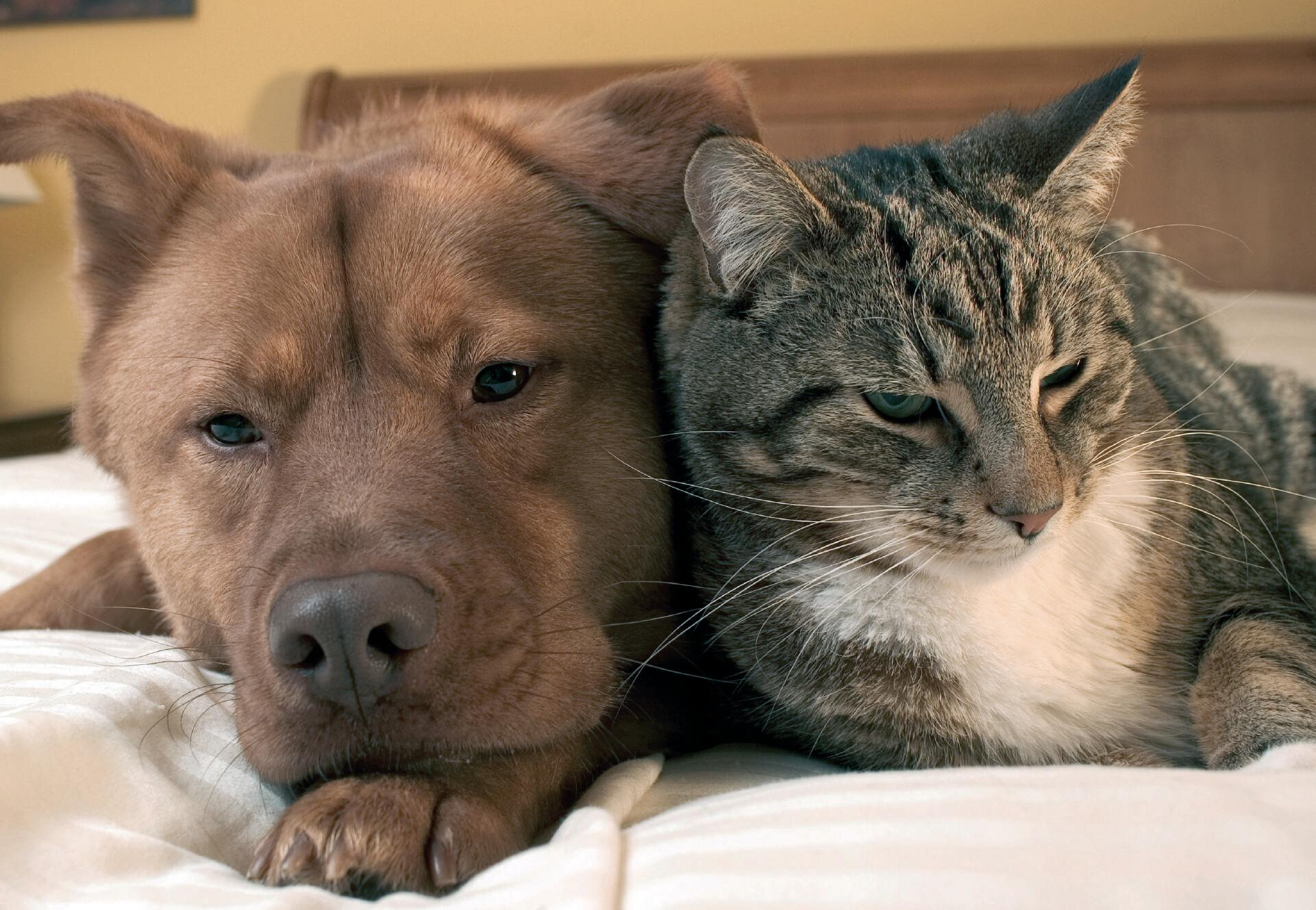 Dog and cat at home