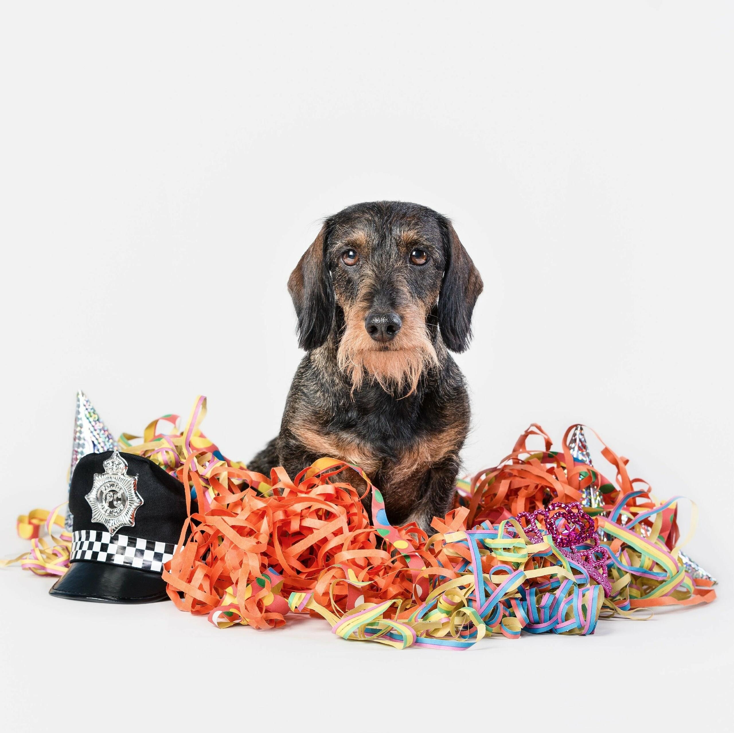 Please do not take dogs to carnival parades or loud parties.