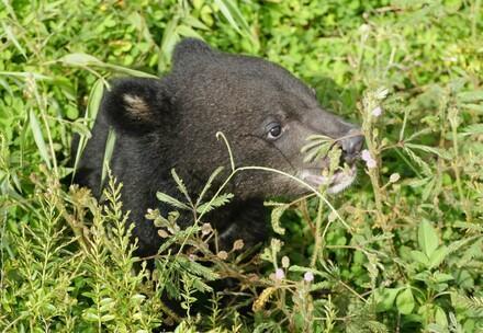Bear Mochi