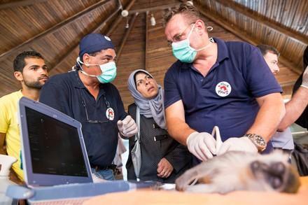 QUATRE PATTES intervient pour aider les animaux dans les zones de crise