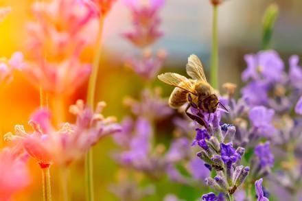 Wildbienen schützen