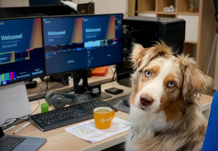Куче в офиса