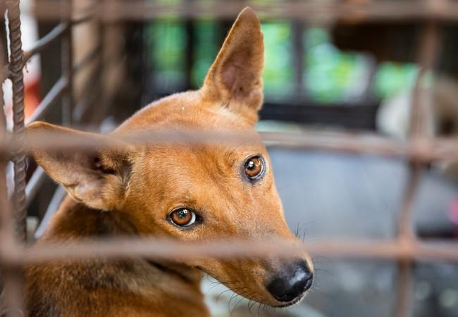 Ein gefangener Hund