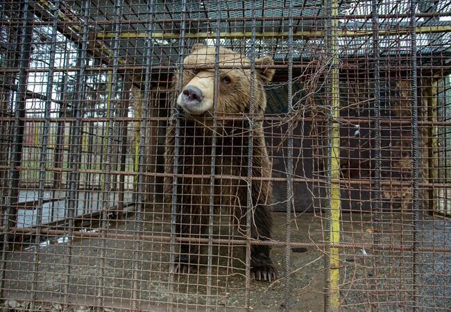 Teddy eingesperrt im kleinen, kaputten Käfig