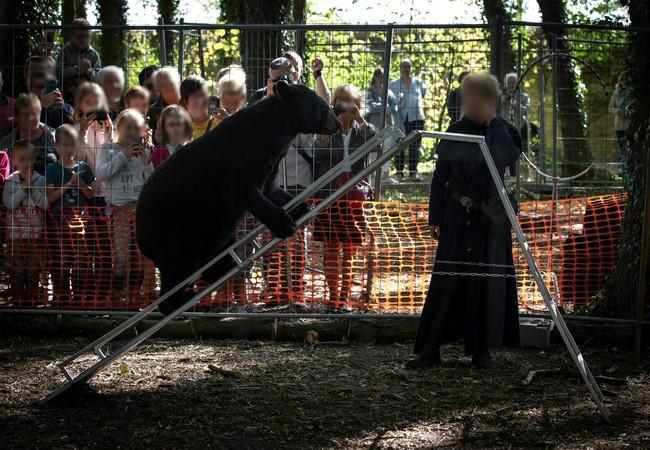 Bear at a bear show in France