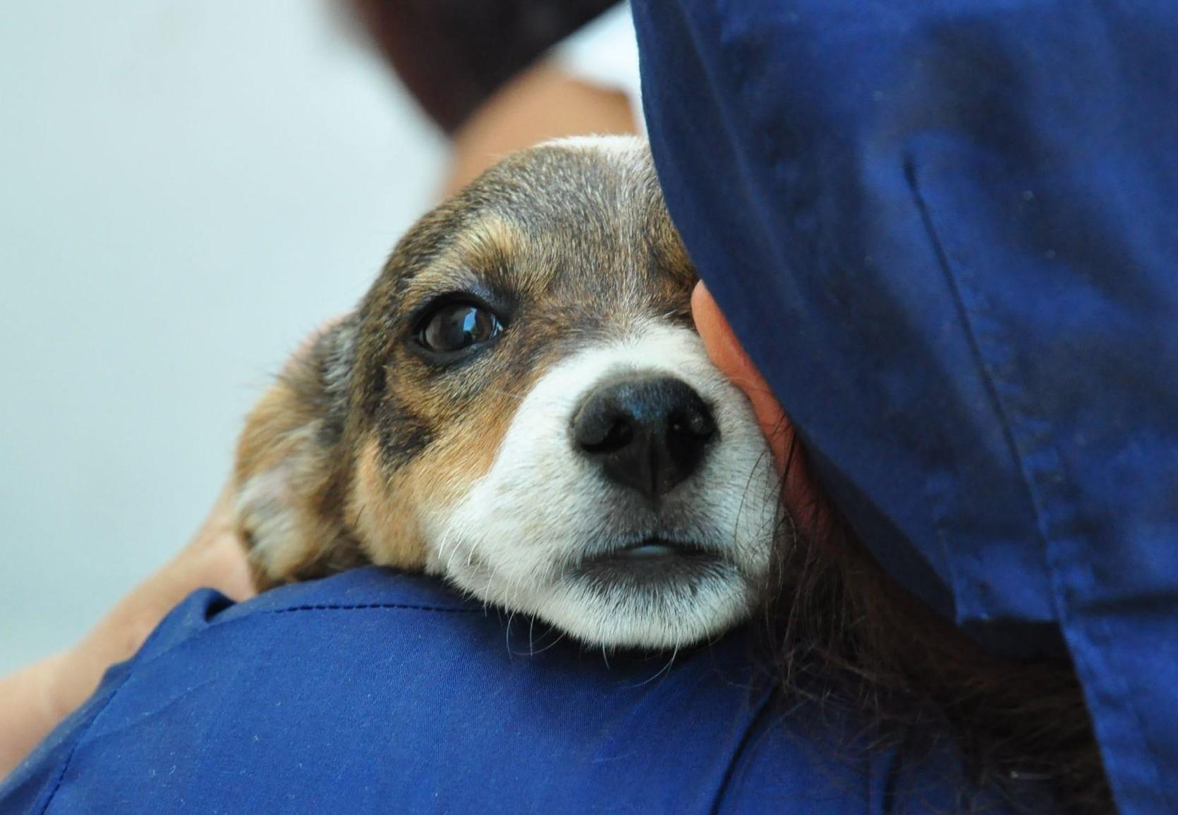 puppy-human