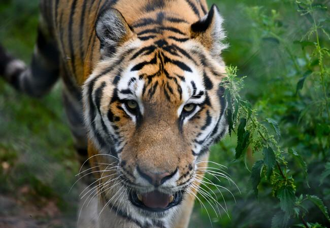 Sahib in der TIERART Wildtierstation