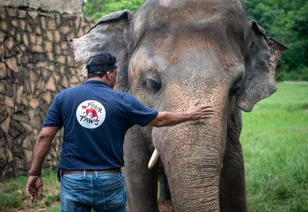 FOUR PAWS supports rescue of over 30 zoo animals in Pakistan