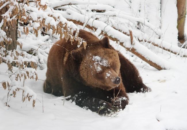 Lothar im Schnee